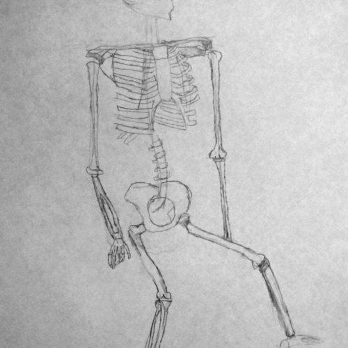 human_skeletal_bone_structure